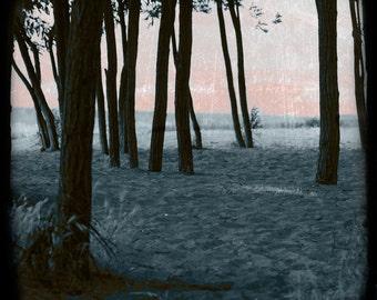 Beach Trees  TTV Original Signed Fine Art Photograph