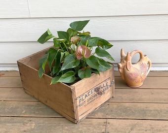 Wooden Produce Crate, 1940s Placerville Fruit Crate, El Dorado Co., California