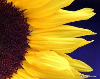 sunflower art, sunflower photo, sunflower wall art, summer art, summer decor, yellow wall art, blue decor, yellow blue art, blue yellow art
