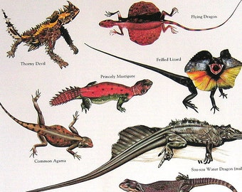Thorny Devil, Common Agama, Flying Dragon, Frilled Lizard Vintage 1984 Birds Book Plate