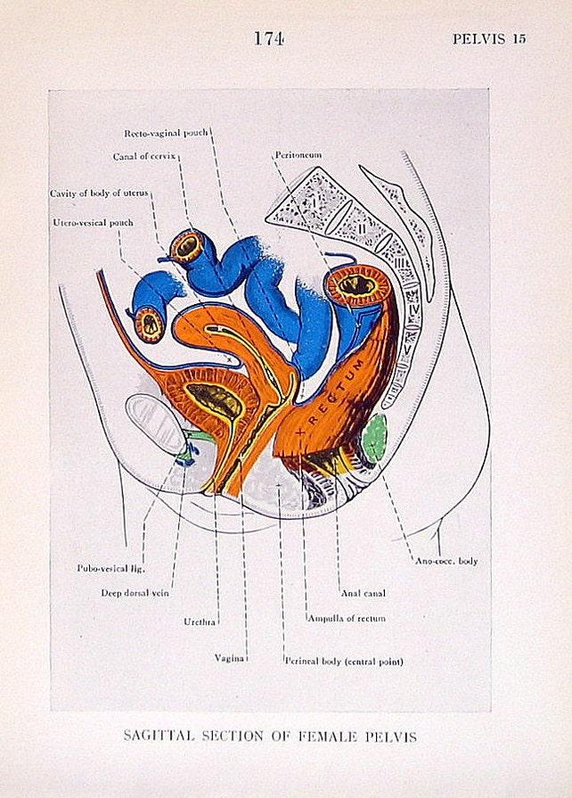Weibliche Anatomie Print 2 Seiten 1947 Anatomie Buch Plate | Etsy