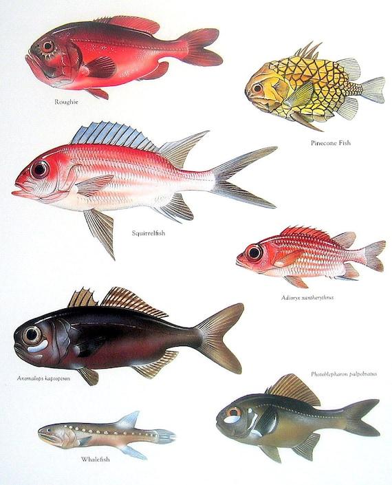 Tendencia pescado pez de colores goldfish t peces for Criadero de peces goldfish