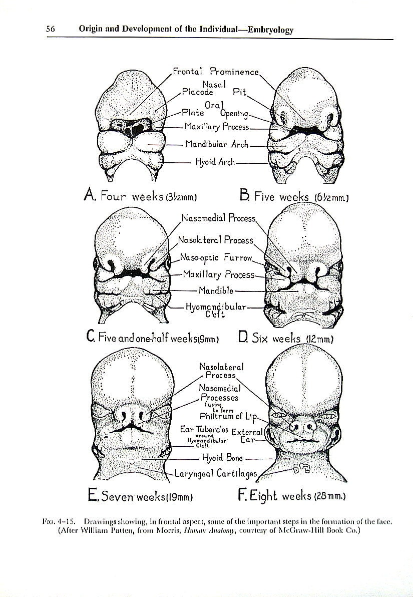 Human Embryology Origin and Development of an Individual