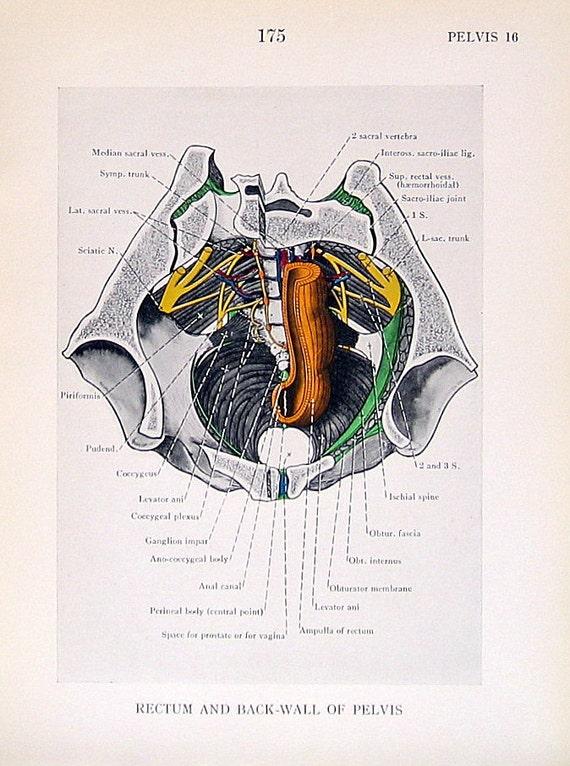 Anatomía 2 impresiones placa del libro