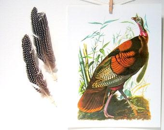 Wild Turkey Gobbler 1987 Vintage Audubon Bird Print Book Plate