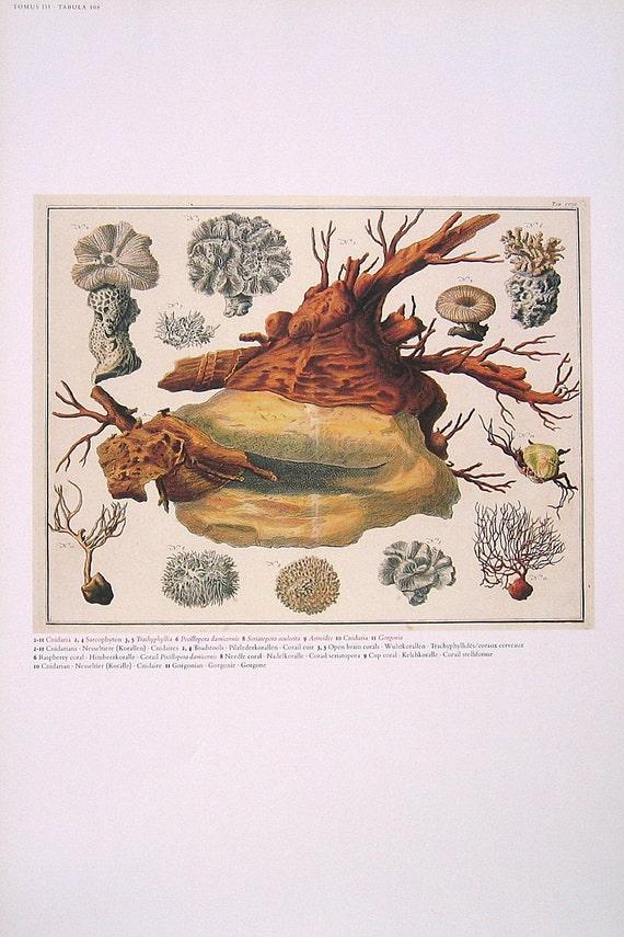 Wasserpilz offene Hirnkoralle Himbeer Koralle Tasse Coral