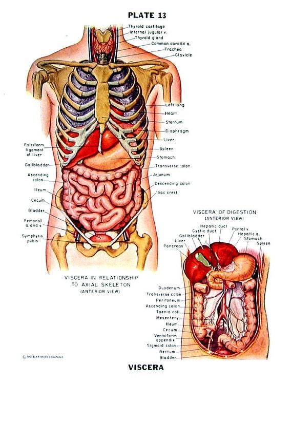 Menschliche Anatomie Eingeweide menschliche Anatomie Chart
