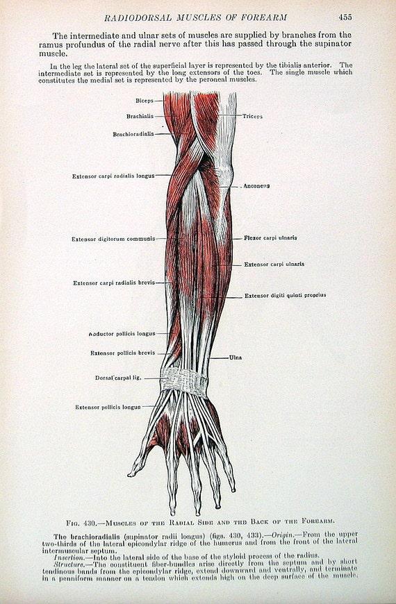 Human Anatomy Tendons Of The Hand 1933 Human Anatomy Book Etsy