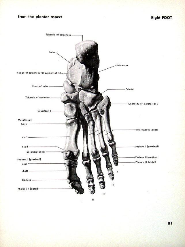 Menschlicher Fuß rechter Fuß 1951 Vintage Anatomie Buch | Etsy