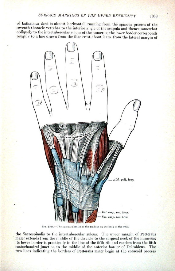 The Human Hand Mucous Sheaths Of Tendons Back Of The Etsy