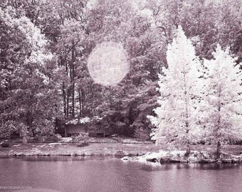 Two Trees Beside Lake Nature Photo — Beautifully Sunlit Woodland Photograph — Pink Monochrome Nature Wall Art — Soothing and Serene Photos