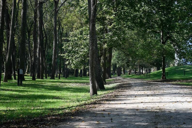 Woodland Road Art Photograph  Serene Verdant Forest  Nature image 0