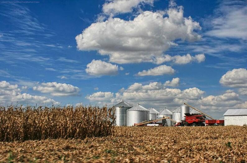 Sunny Harvest Photo Art  Autumn Cornfield and Silver Grain image 0