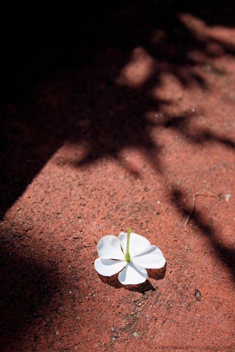 Fallen White Flower Photo  Garden Art Photograph  Nature image 0