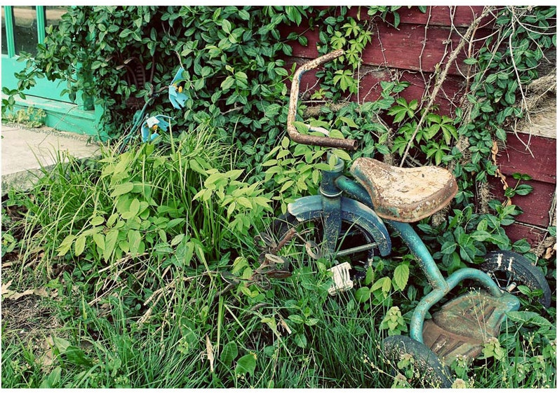 Overgrown Garden Photo  Rusty Blue Tricycle Nestled Into image 0