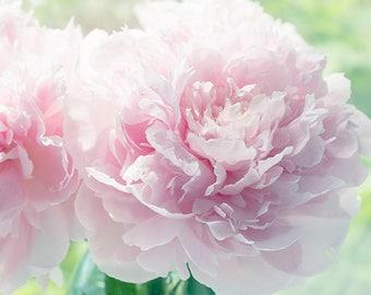 Sunny Peony Print, Pink Home Decor, Floral Art Print,  Peony Wall Art, Peony Photograph