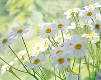 Daisy Print, Shabby Chic Wall Decor, Flower Photography, Floral Art Print