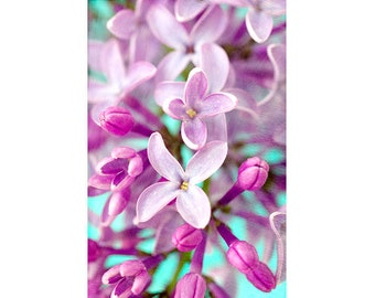 Lilac Flower Photography, Purple Turquoise Floral Wall Art, Bright Decor, Floral Art Print
