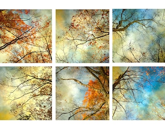 Dramatic Sky Tree Photography Print Set of 6,  Stormy Sky Art, Autumn Landscape, Modern Wall Art
