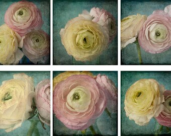Six Ranunculus Print Set, Floral Art, Pink, Teal Wall Art,  Flower Photography Set, Shabby Chic Decor