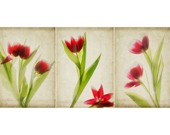 Three Red Tulip Botanical Prints, Scanned Flower Art, Floral Wall Decor, Nature Photography, Still Life