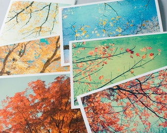 Greeting Card Set with Envelopes, Six Autumn Photo Cards, Tree Photography Note Cards