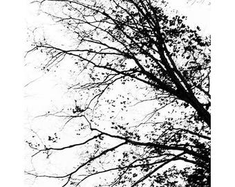 Black and White Tree Photograph, Tree Art Print, Modern Art, Abstract Photography, Landscape