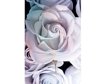 Rose Photography, Floral Art Print, Dramatic Wall Art, Rose Bedroom Decor