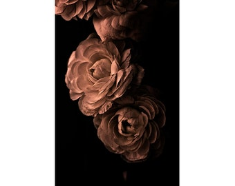 Sepia Photography, Rose Art Print, Gold Wall Art, Dramatic Decor