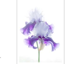 Iris  Photo Card , Blank Card,  Anniversary Card, Floral Greeting Card, Purple Iris Card