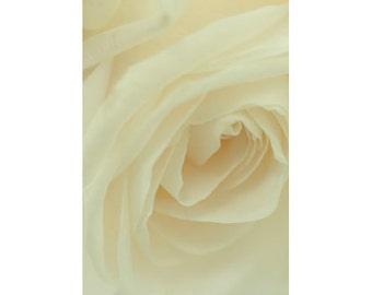 White Rose Art, Rose Photograph, Wedding Decor, Wedding Art,  Floral Art Print, White Wall Decor, Flower Photo