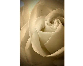 Rose Art, Rose Wall Decor, Rose Photo,  Sepia Photography, Floral Art, Flower Photo