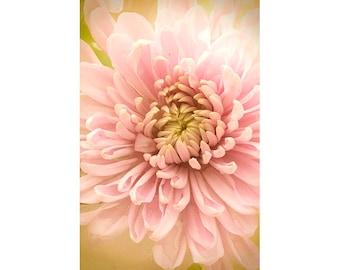Chrysanthemum Art Print, Flower Photography, Pink Gold Wall Art, Bedroom Decor