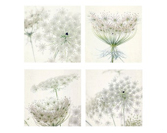 Queen Anne's Lace Print Set of 4, White Floral Art Print,  Flower Photography, Housewarming Gift