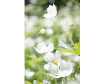 White Anemone Flower Photography, White Green Floral Wall Art, Cottage Decor, Summer Art