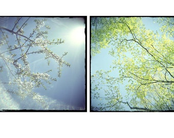 Spring Sky Landscape Photography, Pear Blossoms, Chartreuse  Turquoise Decor, Fine Art Print Set, Nursery Art Set,  Holga, Lomography