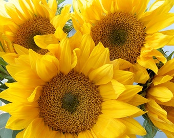 Sunflower Art, Sunflower Print, Flower Photography, Yellow Decor, Nursery Art, Fine Art Print