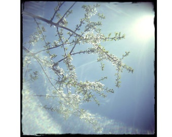 Fine Art Photography Print, Flower Photo,  Spring Blossoms, Lomography, Sky Landscape Photo , Fine Art Print, Shabby Chic Wall Art