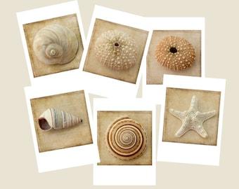 Six Seashell Card Set, Sepia  Beach Art Cards,  Nautical Greeting Card Set,  Blank Cards, Sea Shell Cards, Sea Urchin, Star Fish