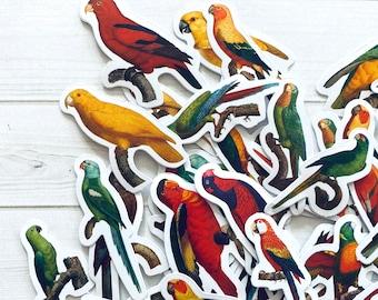 Bird Stickers - Set of 46 - Nature Stickers, Junk Journal Paper Ephemera, Planner Supplies, Craft Supplies, Nature Ephemera, Cute Parrot Lot