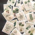 Plant Stickers - Set of 45 - Nature Stickers, Junk Journal Paper Ephemera, Planner Supplies, Craft Supplies, Nature Ephemera, Nature Lot