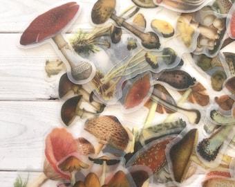 Mushroom Stickers - Set of 30 - Nature Stickers, Junk Journal Paper Ephemera, Planner Supplies, Craft Supplies, Nature Ephemera, Fungi