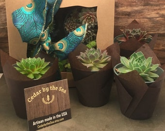 Succulent gift box, Gardener gift, Garden in a box, Thank You Gift, Birthday Gift, Best gift for here. gift for a diet, cupcake gift box,