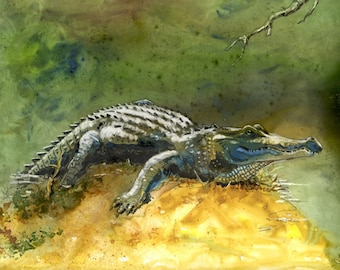 American alligator watercolor art print 8.5 X 11 from original Barry Singer Yupo Painting