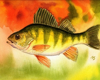 Perch fish Watercolor Painting 8X10 or 8.5 X 11 Best Cottage or Lake House Decor Colorful Art Print by fishing artist Barry Singer