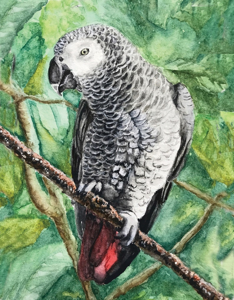 10-pack Parrot Notecards