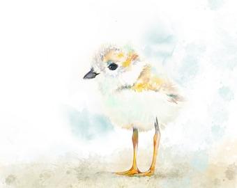 Piping Plover baby bird print, custom wall art