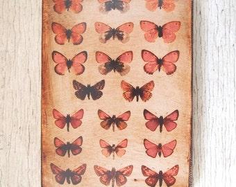Butterflies Specimens Photo  F -Wall Art