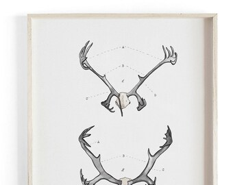 Antler Study Caribou- Nordic Collection - Beautifully textured cotton canvas art print.  Large scale art