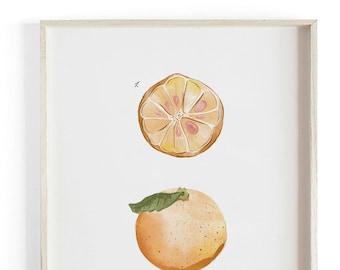 Kumquat vol.2 - Holiday art - Beautifully textured scientific cotton canvas art print. Order as a 5x7 8x10 11x14 or 16x20 size.